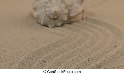 Approaching a beautiful seashell lying on a wavy sand.