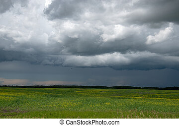 Approaching storm clouds above a canola field, Saskatchewan, Canada.