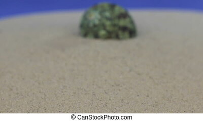 Approaching the sea shell lying on the sand. Isolated, blue...