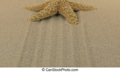 Approaching the starfish lying on the lines of sand.