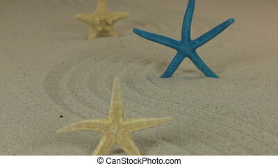 Approaching the three starfish standing on the sand zigzag....