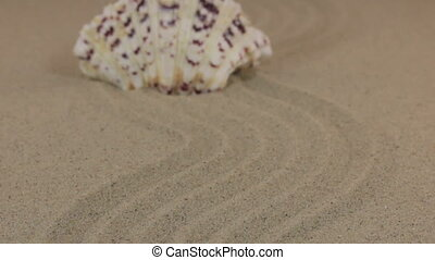 Approximation of a beautiful white seashell standing on a...