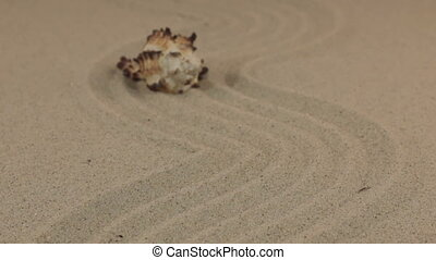 Approximation of a beautiful yellow seashell lying on a zigzag made of sand.