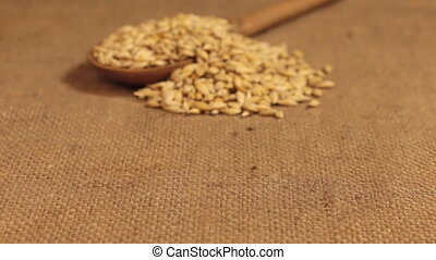 Approximation of a wooden spoon overflowing with barley grains, lying on burlap. Dolly shot
