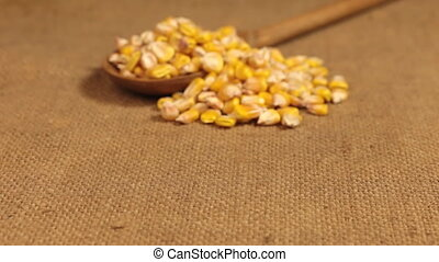 Approximation of a wooden spoon overflowing with corn grains, lying on burlap. Dolly shot.