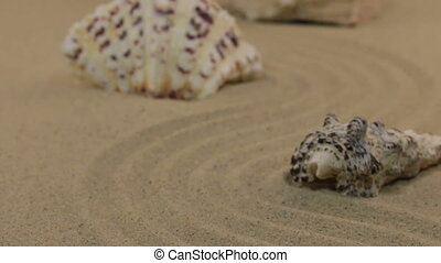 Approximation of seashells, lying on a zigzag from the sand. Dolly