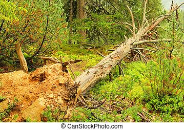 après, arbre, 01, orage