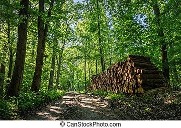 après, arbre, stockées, forêt, orage, abattage