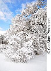 après, arbres, orage glace