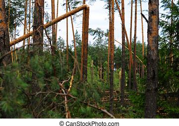 après, arbres, puissant, cassé, ouragan