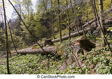 après, arbres, windblown, forêt, orage, fort