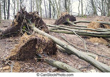 après, déraciné, arbres, orage