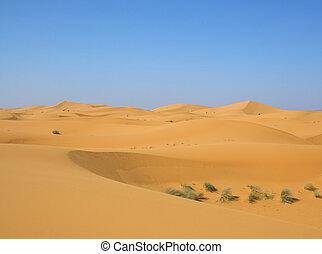 après, désert, pluie