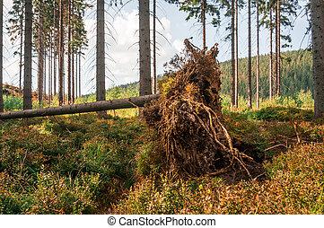 après, forêt arbre, orage, baissé, racines