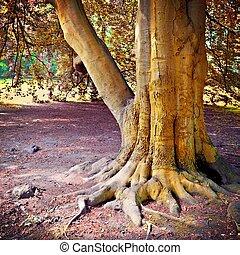 après, grand, chêne, pluie, arbre