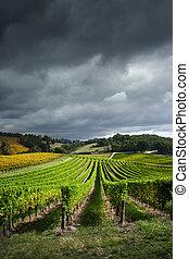 après-midi, vignes