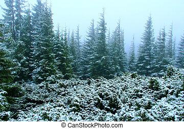 après, neige, forêt, sapin, année, premier