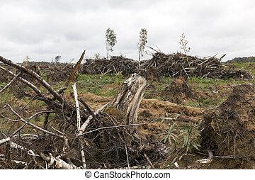 après, ouragan, arbres