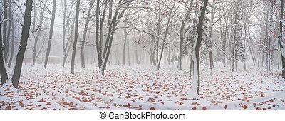 après, parc, neiger orage
