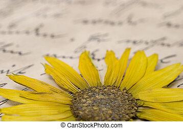 apretado, flor, en, carta