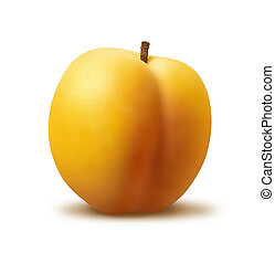 Apricot - A photo of a single apricot on a white background