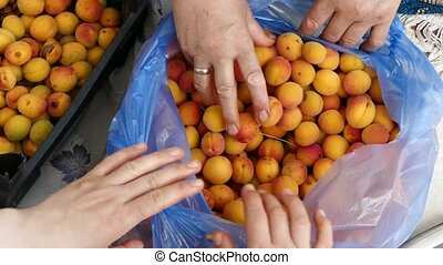 apricot, apricot kernels, woman extracting apricot kernels,