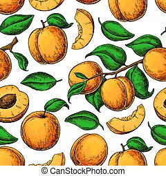Apricot seamless pattern. Vector drawing. Hand drawn fruit, branch and sliced pieces. Summer food background. Detailed vegetarian sketch. Great for label, print, packaging, fabric