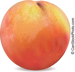 apricot fruit isolated on the white background vector.