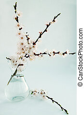 apricot in a glass vase