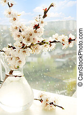 apricot  in a vase