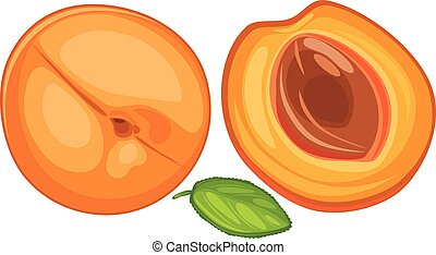 Apricot isolated on the white