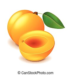 Apricot isolated on white vector