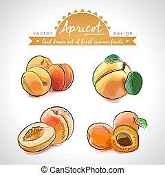 Apricot. Set of fresh fruits, whole, half and bitten with ...