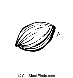 Apricot stone on a white background. Hand-drawn vector illustration.