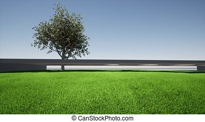 Apricot tree isolated green grass 4k