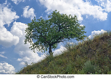 Apricot tree on a hill against blue cloudy sky at summer time
