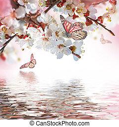 aprikos, blomningen, in, fjäder, blommig, bakgrund