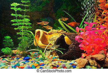 aquário, peixes, de, diferente, espécie