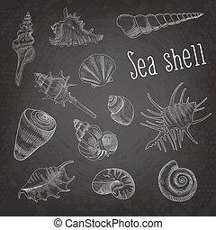 aquático, elements., doodle, blackboard., isolado, ilustração, mão, vetorial, mar, seashells, desenhado, concha, marinho