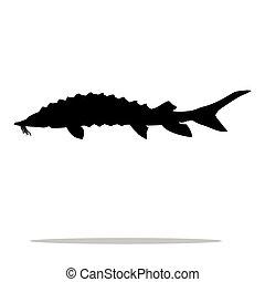 aquático, silueta, peixe, esturjão, pretas, animal