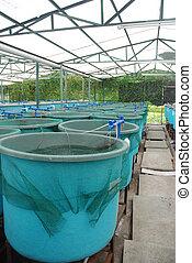 aquaculture, boerderij, landbouw