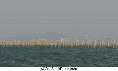 Aquaculture of shellfish Oyster farm in the sea at Thailand, Pattaya, Asia