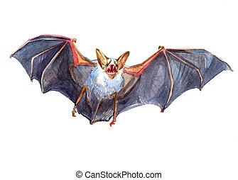 aquarela, único, morcego,  animal, isolado