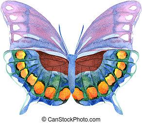 aquarela, borboleta