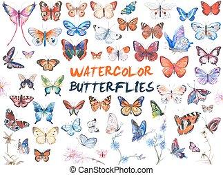 aquarela, borboletas, ilustração