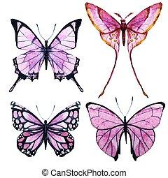 aquarela, borboletas, vetorial