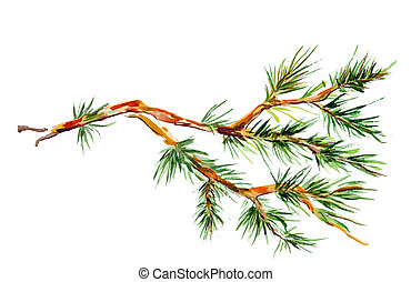 aquarela, branch., pinho