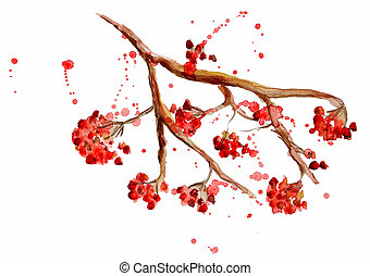 aquarela, branch., rowan, baga