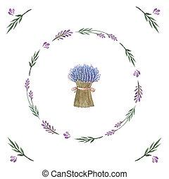aquarela, buquet, vetorial, lavender.