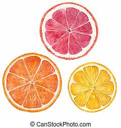 aquarela, cítrico, ilustração, frutas